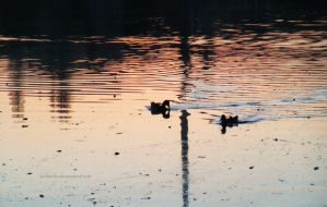 ducks in the lake / sunset by SoBiEsKii