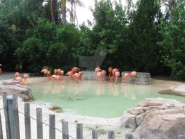 Flamingo Flock by CelticStrm-Stock (24) by CelticStrm-Stock