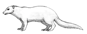 redesigning of TFIW 5mya Coldplain weasel by Dragontunders