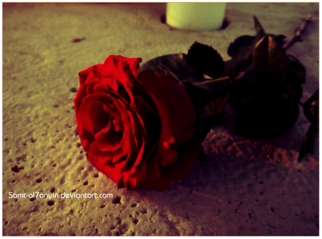 Lonely Rose VI by Samt-al7anyin