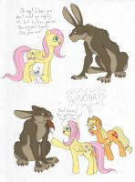 MLP - Big Bunny? by merrypaws