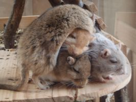 A pile of gerbils by DJulie95