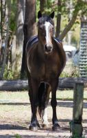 STOCK - 2014 Sep Tolly-65 by fillyrox