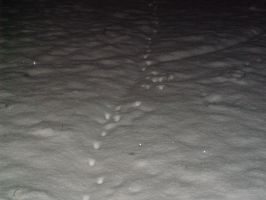 Frozen pawprints 1 by Ironhold