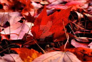 Autumn Occurrence by ashleerosaria