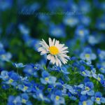 I'm blue today by theluckynine