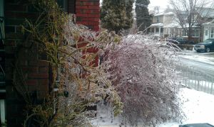 After the ice storm by LastPaige