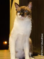 ANGRY CAT by PS-XiaoFeng