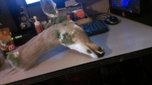Whitetail fawn doe, WIP 2 by psychische