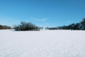 Snowscape Stock 26 by Sed-rah-Stock