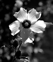 As3110bw by Placi1