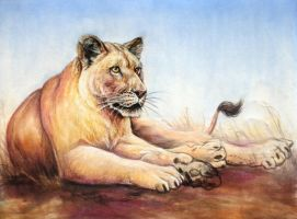Lioness resting by Bisanti