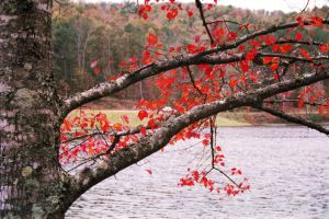 Autum in Alabama by killforhire07