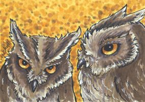 ACEO Owls II by nickyflamingo