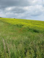 Poppy and rapeseed flower field stock 2 by Sassy-Stock