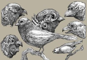 Bird characters by Prinsler