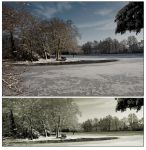 woerlitz-lake by greenfeed