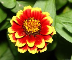 Red with edges of yellow by natureguy