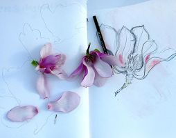 japanese Magnolia Sketch by lamelobo