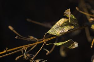 branch to nothingness by tea