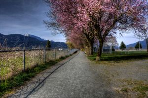 Pink tree HDR by jverm