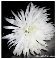 ... White Flower ... by Eleanorah