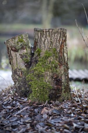 Tree stump by Fotostyle-Schindler
