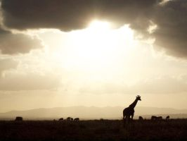 Ngong and Giraffe by GREYFading