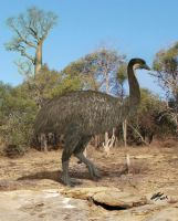 Elephant bird = The Kiwi's lost cousin by Gogosardina
