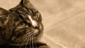 Cat at the bathroom HD by Khrinx