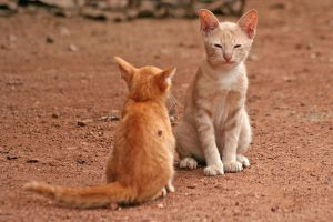 Two Cats 139110 by StockProject1