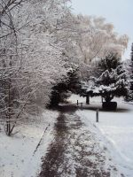 the path of snow life by astridlover