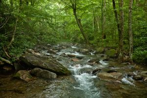 Serenity in Tennessee by worthdyingfor