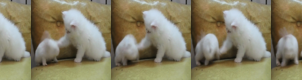 Cute Cat Gif for Xat by Mario1630isAwesome