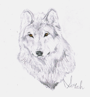 Wolf for HappyGirlXD by CameronFedora