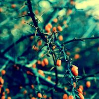 like a thorn by illusionality