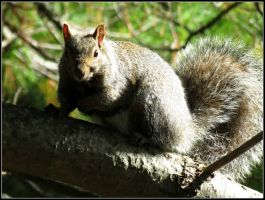 Squirrel Portrait #3 by Michies-Photographyy