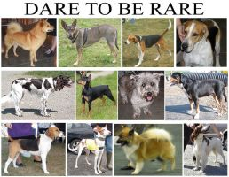 DARE TO BE RARE part 3 by DogExpert