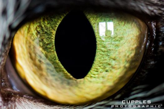 All Seeing Eye by cupplesey