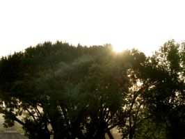 Sunset with trees by CHritzel