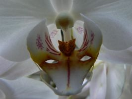 White Orchid by Azagh