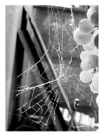 Spiderwebs by Parororo