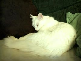 White cat sleeping by NaviStock
