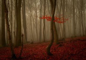 Forest 8 by LillianEvill