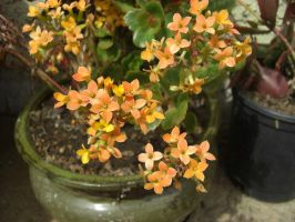 LIttle Orange Flowers by mattiemoonflower