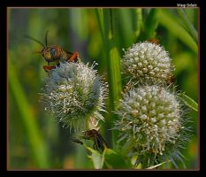 Wasp Salute by boron