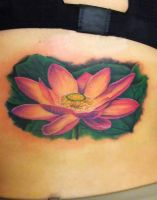 Lotus flower by asussman