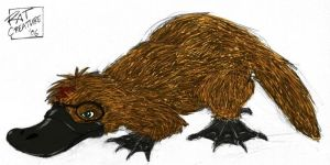 HP: Harry as platypus animagus by ratcreature