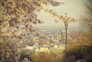 My Budapest by Becso