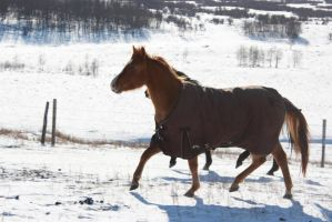 Blanketed horse running through snow 7 by eluhfunt-stock
